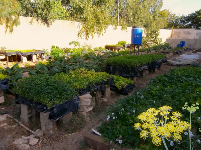 Extending Basic Gardening Practices to Senegalese Young People