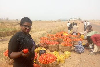 Tomato Processing Training in Kabala