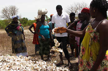 Transformation of Oyster Products for the Women of Nema Bah