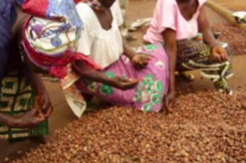 Enhancing the livelihoods of Zabzua women in the Shea industry